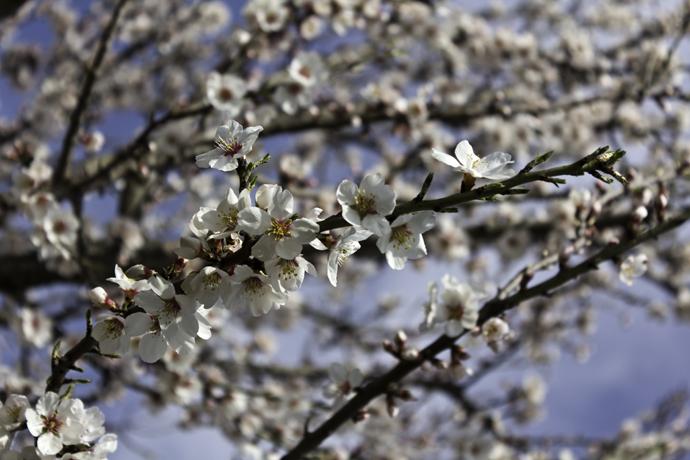 Itt a tavasz 2011