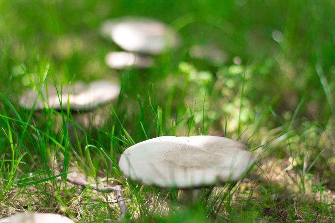 Csak gombák